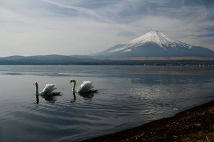 Mount Fuji Landscape View Ducks 5k
