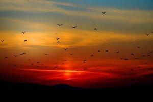 Mountains Birds Silhouette Sunset Dusk Dawn 5k Wallpaper