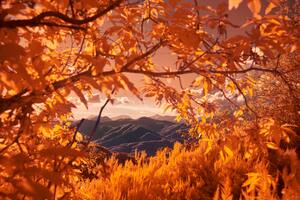 Mountains View Between Autumn Tree Branches 5k Wallpaper