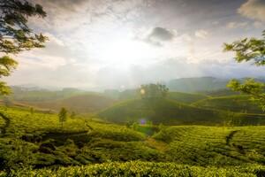Munnar Hills India Wallpaper