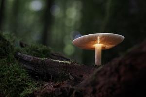 Mushroom Manipulation Nature