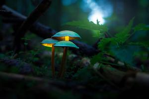 Mushroom Plants Glowing 4k Wallpaper