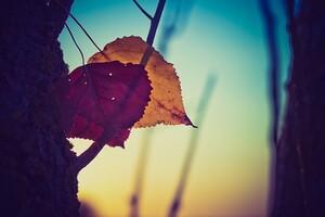 Nature Leaves Desktop Wallpaper