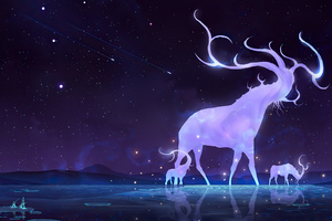 Night Deer Wallpaper