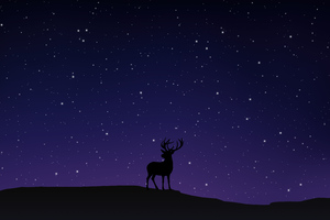Night Sky Deer Minimal 5k Wallpaper