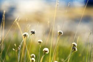 Norway Plants
