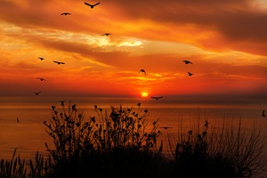 Ocean Sky Birds Flying Towards Sunset 4k Wallpaper