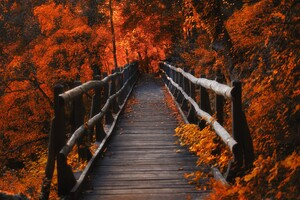 Orange Leaves Bridge