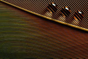 Orange Leaves Macro Water Drops 4k Wallpaper
