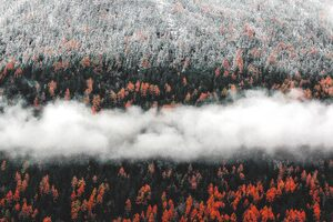 Orange Tress Autumn Forest Landscape Mist Scenic Nature