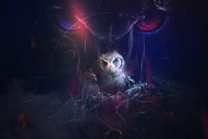 Owl 8k