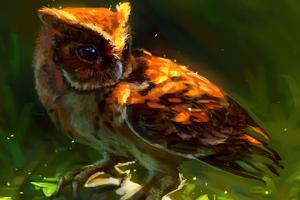 Owl Arts Wallpaper