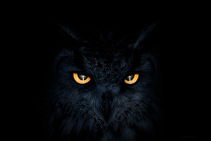 Owl Dark Glowing Eyes