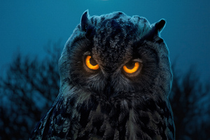 Owl Glowing Eyes Wallpaper