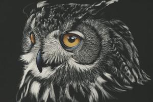 Owl Painting 4k