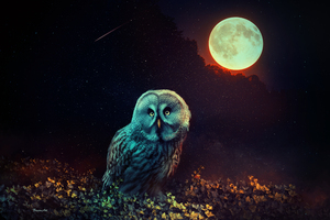 Owl The Night Guard Wallpaper