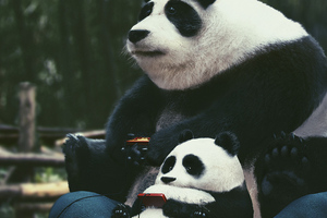 Panda With Son Enjoying Video Games