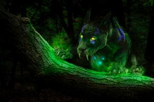 Panther Night Time Wallpaper