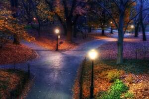 Park Evening Trees Fall