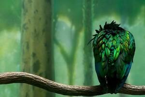 Parrot Beautiful Art