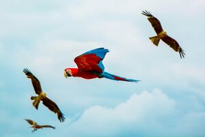 Parrot Birds Flying 4k Wallpaper