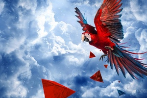 Parrot Blue Sky Wallpaper