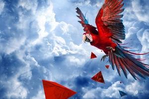 Parrot Blue Sky