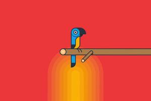 Parrot Minimalism 5k Wallpaper