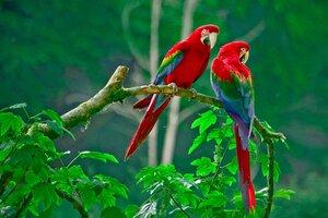 Parrots Paradise Wallpaper