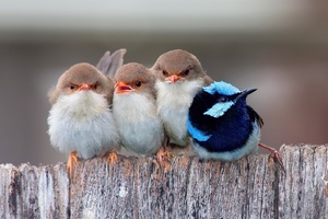 Passerine Birds Wallpaper