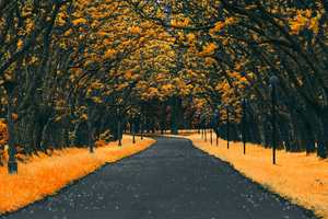 Paved Road Autumn 4k Wallpaper