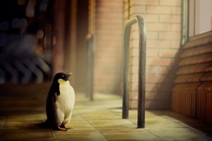 Penguin Hope Wallpaper