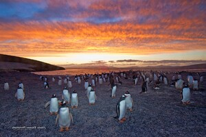 Penguins Colony