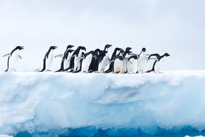 Penguins In Antarctica Wallpaper