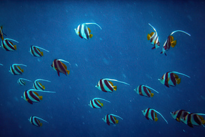 Pennant Coralfish 5k Wallpaper