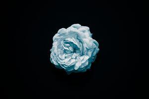 Petal Flower Oled 4k Wallpaper
