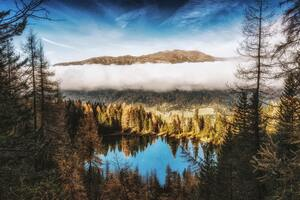 Pine Trees Beside Water Body Mountains Clouds 4k