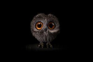 Pinfeather Fluffy Owl 4k Wallpaper
