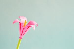 Pink 4 Petaled Flower Wallpaper