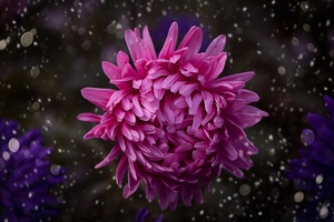 Pink Color Flower Bokeh Wallpaper