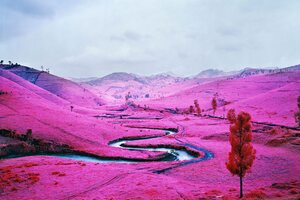 Pink Field Democratic Republic Of The Congo Wallpaper