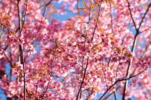Pink Flowers Blossom Season Background 4k