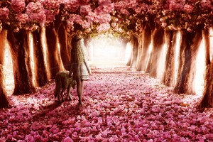 Pink Flowers Path