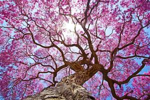 Pink Tree 4k