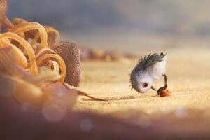 Piper Animated Movie