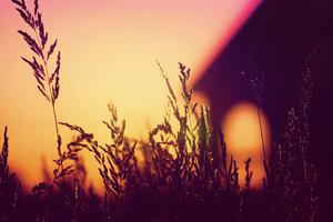 Plants Blurred Silhouette Sunset 4k