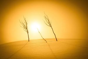 Plants Sunlight Desert 4k Wallpaper