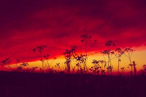 Poland Sunset 5k