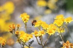 Pollination Bee Wallpaper