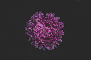 Purple Flower Blossom 5k Wallpaper
